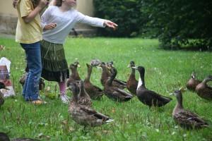 Kinder und Enten sind besonders geschickt im Nutzen von Beziehungsmacht